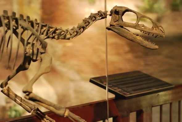 """Tiny Tyrannosaur Named the """"Coyote King"""""""