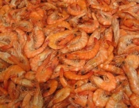 A universe of nothing but shrimp