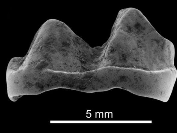 Paleo Profile: The Vastan Mine Tapir