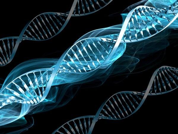 DNA Is Not a Blueprint