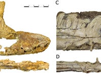 Spain Gets a New Fossil Flying Reptile