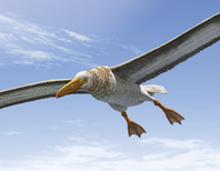 Visualizing a Really Big Bird