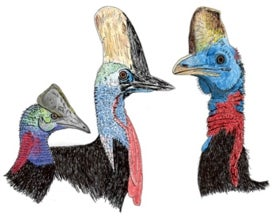 Inside the Cassowary's Casque