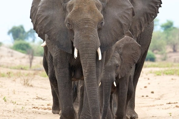 Of Animal Germs and Pachyderms