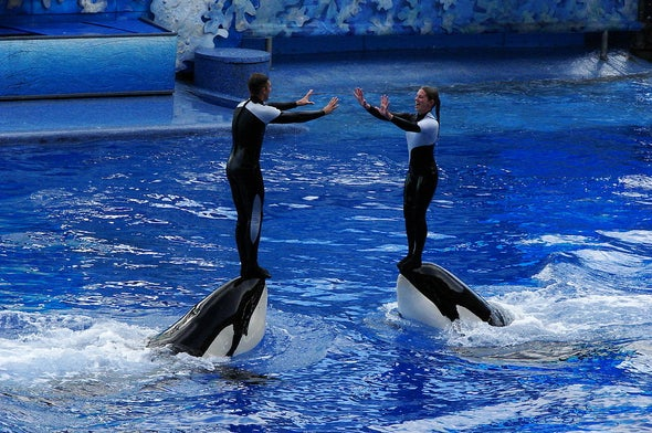 Why SeaWorld Is Finally Doing Right by Orcas