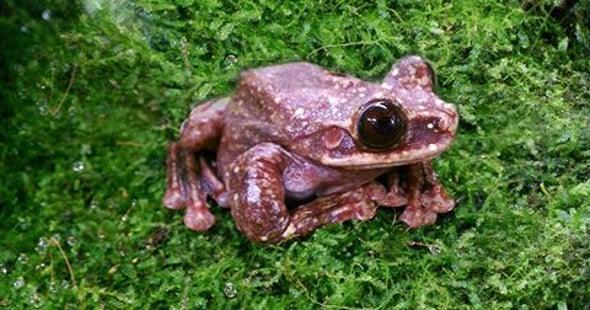 The Rabbs' Tree Frog Just Went Extinct