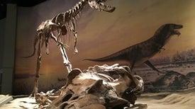 Dinosaurs Had Birdlike Lungs