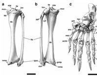 Paleo Profile: North America's Pangolin