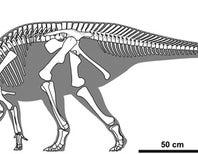 New Duckbill Dinosaur Looks Sharp