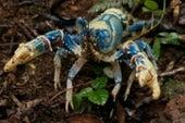The Secret World of Crayfish Extinction (and beyond)
