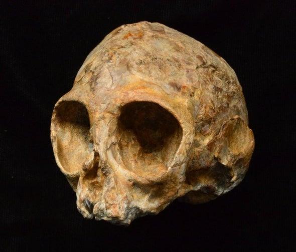 Meet Alesi, the Prehistoric Infant Ape
