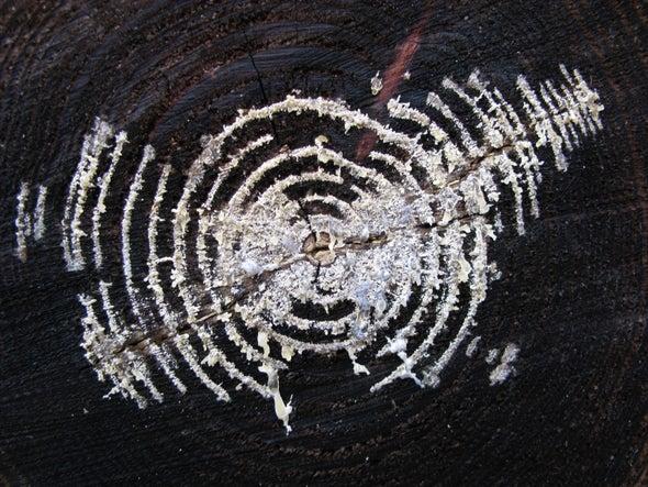 The Mycelium Revolution Is upon Us