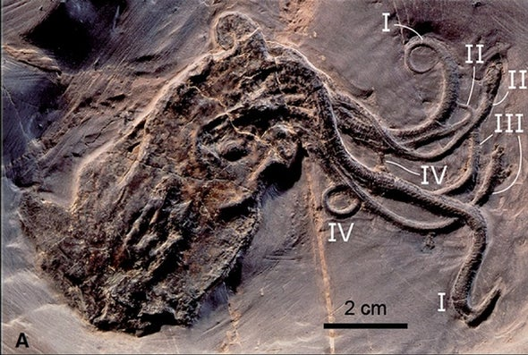 Fossil Octopus Is a Jurassic Jewel