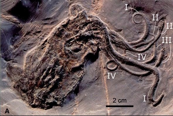 Fossil Octopus Is a Jurassic Jewel