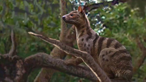 Paleo Profile: The Fierce Cat