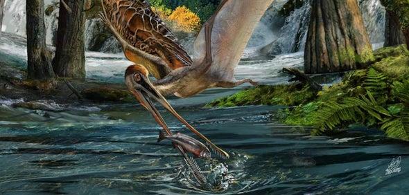 Paleo Profile: Pangu's Wing