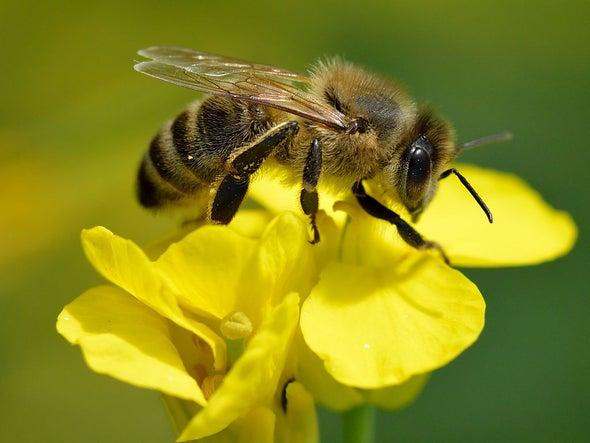 Bees Gone Wild