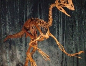 "500-Pound ""Chicken from Hell"" Dinosaur Once Roamed North America"
