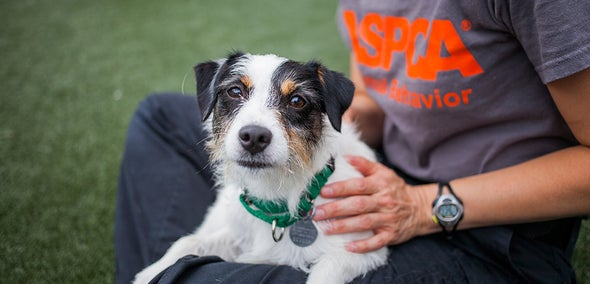 The Science of Animal Shelters: An Inspirational Series [Video]