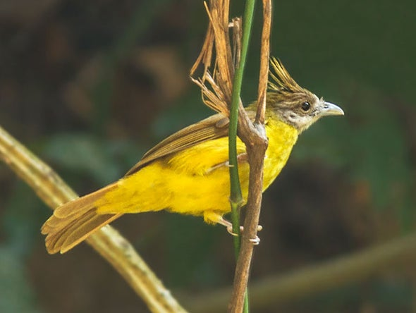 New Technology Reveals Hundreds of Bird Species at Risk
