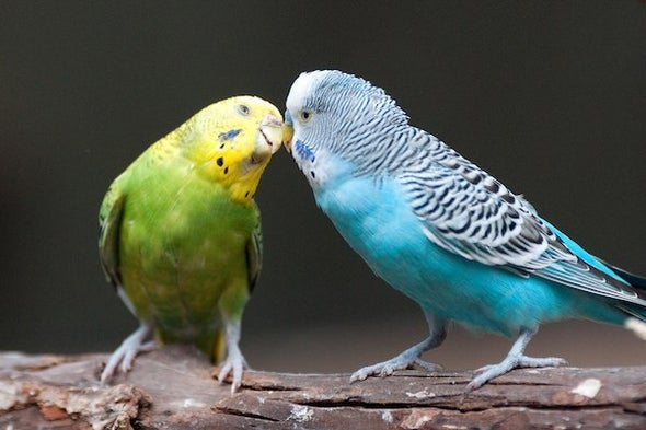 Birds Can Tell Us a Lot about Human Language