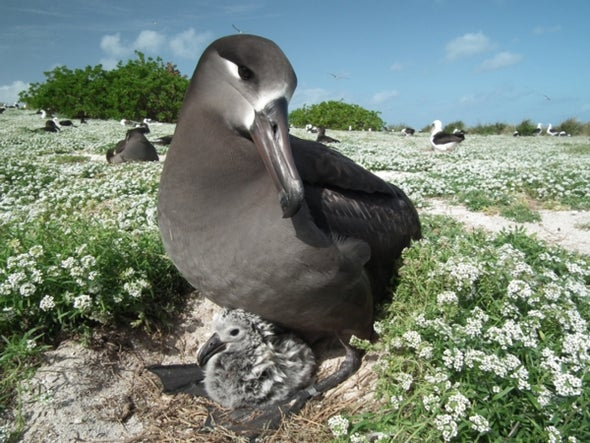 Rising Seas and Pounding Waves Will Threaten 3 Common Pacific Seabirds