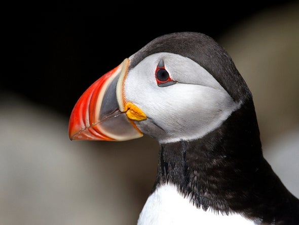 No Fish, No Fowl: European Fish and Birds in Decline, Despite Some Conservation Successes