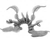 A Science Illustrator's Legacy