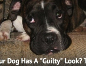 "The Dodo Resurrects the Dog's ""Guilty"" Look"