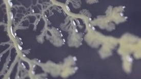 Slime Molds Are Smarter Than You Think