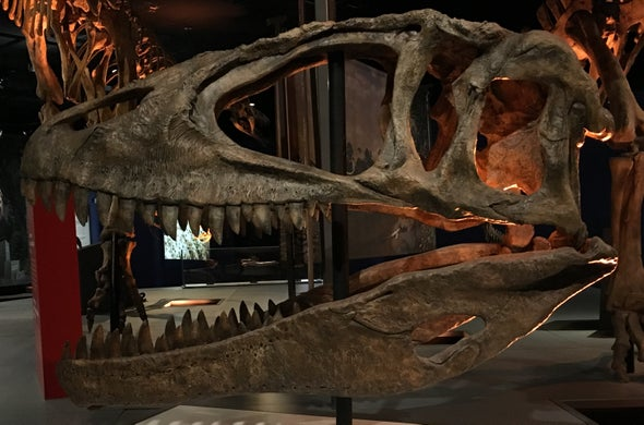 The Rise and Fall of the Shark-Toothed Dinosaurs