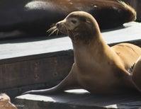 Urban Wildlife in San Francisco Bay [PHOTOS]