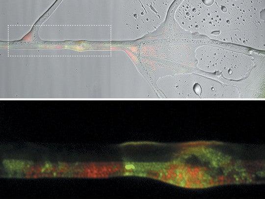 Fungi importance to many fish dating
