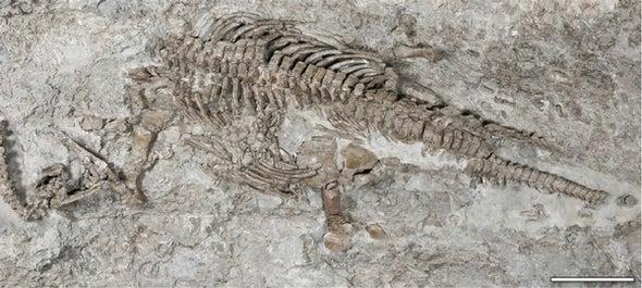 Paleo Profile: The Rhaetian Lizard