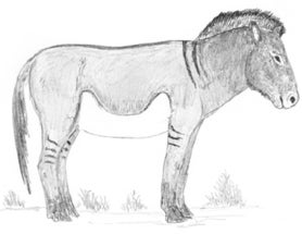 Spots, Stripes and Spreading Hooves in the Horses of the Ice Age