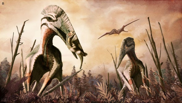 Enigmatic Pterosaur Was a Terrestrial Stalker