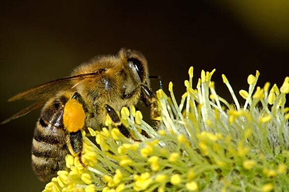 Dirty Bees Are Good for Flowering Plants