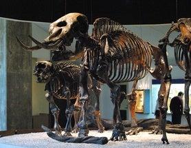 blogs.scientificamerican.com - Brian Switek - Trundling toward Extinction