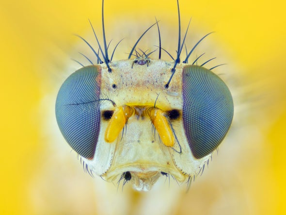 Could Fruit Flies Reveal the Hidden Mechanisms of the Mind?