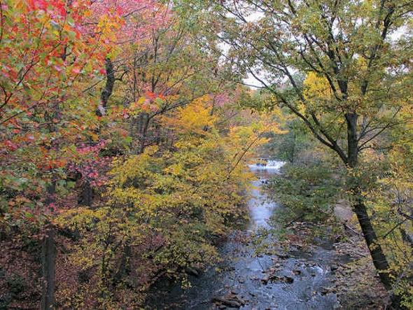 New Urban Naturalist Program Fills an Important Void