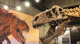 "Is ""Scotty"" the Biggest <em>T. rex?</em> Maybe Not"