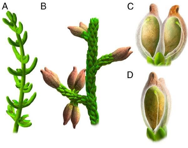 Were the First Flowers Aquarium Plants?