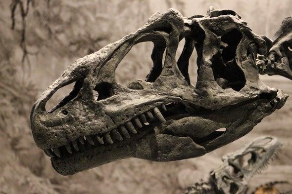 The Making of an Allosaurus Graveyard