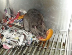 #DNLeeLab: Rethinking my feeding enrichment biases