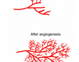 Hallmarks of Cancer 5: Sustained Angiogenesis