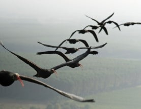 Technology Unlocks the Mysteries of Bird Flight