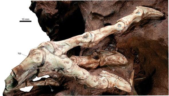 A Strange Dinosaur's Unusual Strut