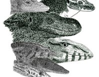 Obscure and attractive monitor lizards to know and love