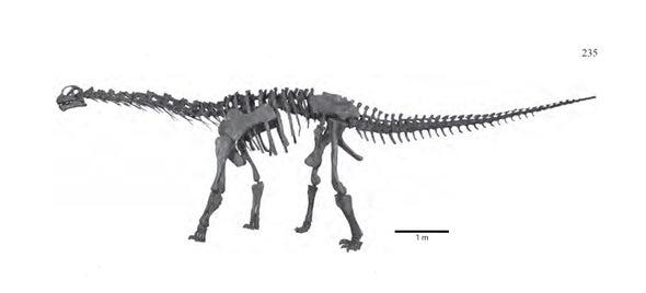 Paleo Profile: The Moab Lizard