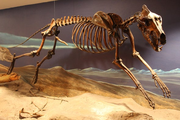 Dire Wolves Were Real